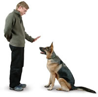 kingston-dog-trainer.jpg