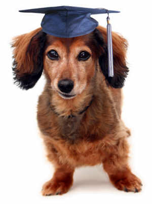 Becoming A Dog Trainer In Ontario
